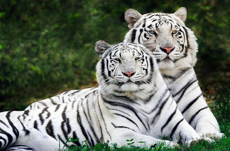 Year of the White Tiger 2010