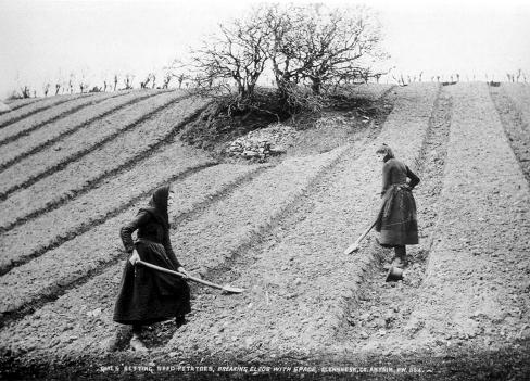 irish-potato-farmers